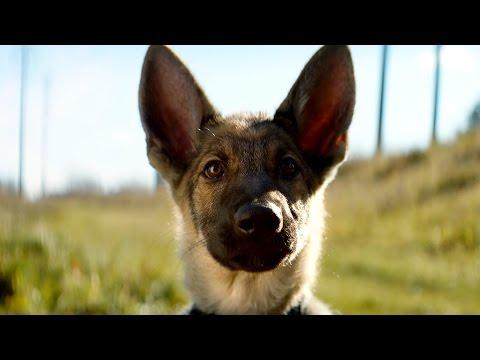 Собачья жизнь — Русский трейлер (2017)