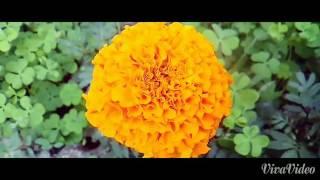 সুন্দর ফুলের আসর all the beautiful flowers