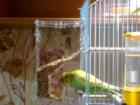 71 Автоматическая кормушка для попугаев