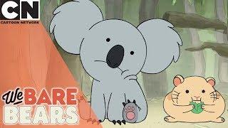 We Bare Bears   Not So Cute Koala   Cartoon Network