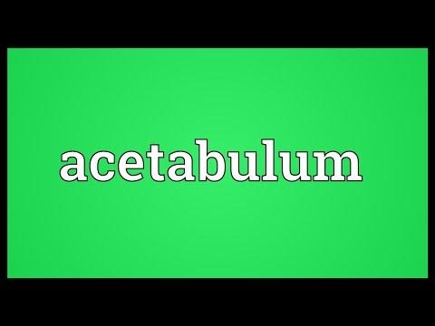 Header of acetabulum