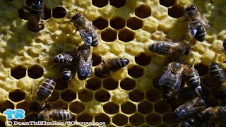 City Worker Stung by Swarm of Bees Hundreds of Times | Gift Of Life