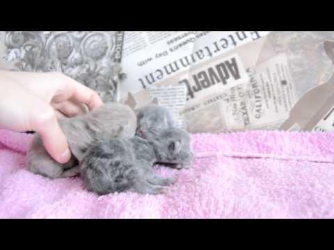 Дневник котят #2   День 1 - Котята родились!