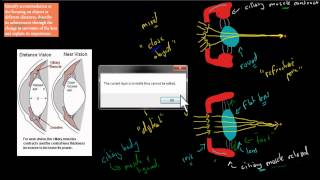 C.3.3. Accommodation and vision (HSC biology)