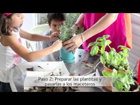 Cómo sembrar hierbas de cocina en maceteros con tus niños