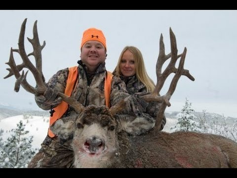 Montana rifle mule deer hunt will farrar mossback for Montana out of state fishing license