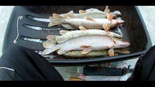все о рыбалке в северо-казахстанской области