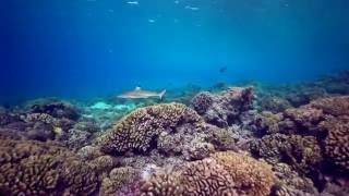 Diving with sharks and manta rays in Fakarava, French Polynesia