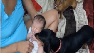 Videos De Risa 2016 - Videos Divertido De Risa Para Niños - Animales Y Niños De Risa