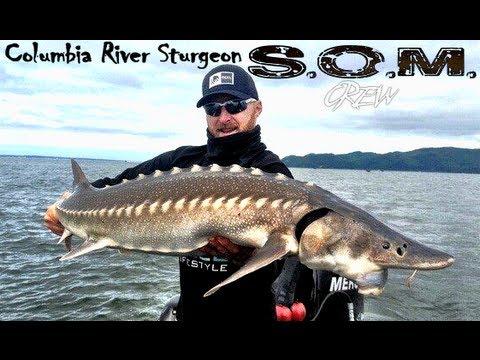 Columbia River Sturgeon Fishing with SOM Crew