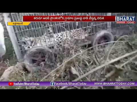 నాగుపాము దాడి లో నాలుగు కుక్క పిల్లలు మృతి | Odisha | BharatToday