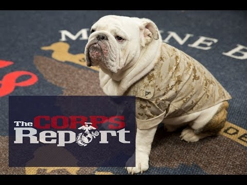 The Corps Report Ep. 34 — Rolled Sleeves Return and Commandant Answers Questions