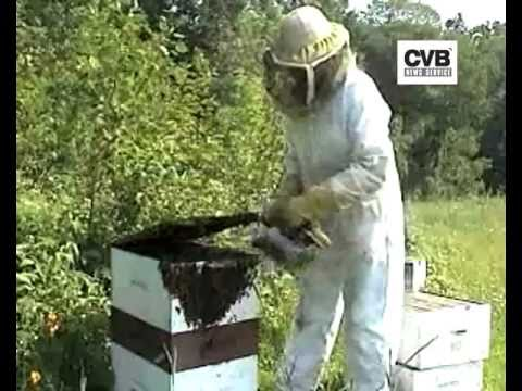 DISAPPEARING BEES MAY LEAD TO GLOBAL FOOD CRISIS