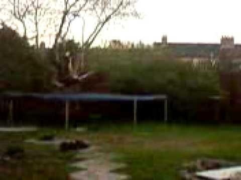 danny nixon dodgy high trampoline tree jump