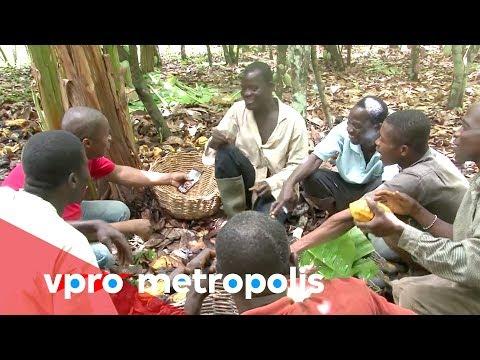 First taste of chocolate in Ivory Coast - vpro Metropolis