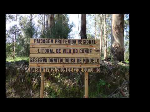 Pelos Caminhos de Santiago(Modivas Sul-Vila do Conde)