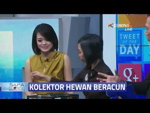 Ini Dia Ratu Tarantula dari Bandung