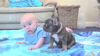 Cutest baby & puppy best friends from Shrinkabulls world famous - by Mindy Grady