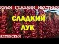 Сладкий ялтинский лук |  Крым 2017