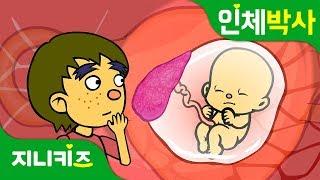 배꼽으로 먹는 밥 | 탯줄로 영양분을 먹는 태아 | 인체박사★지니키즈