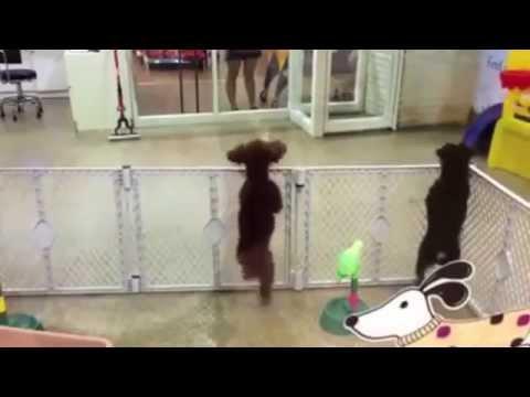 Excited puppy dances salsa