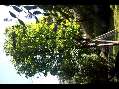 Arborist Tree Work     10