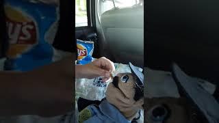 Cop dies because of lays salt and vinegar chip