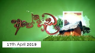 Ape Heda | 17th April 2019
