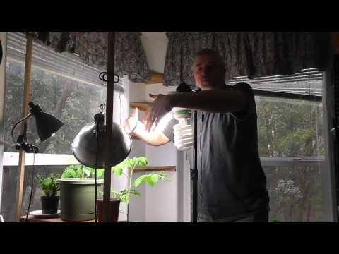 Indoor Grow Room Lighting With CFL