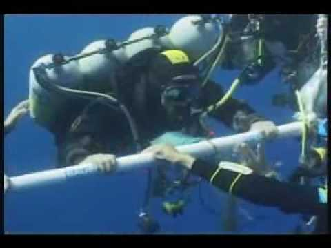 "Nuno Gomes is the current (2008) Deepes dive world record holder, that dive was documentated on video (watch ""Beyond Blue"" documentary) and here are the extr..."