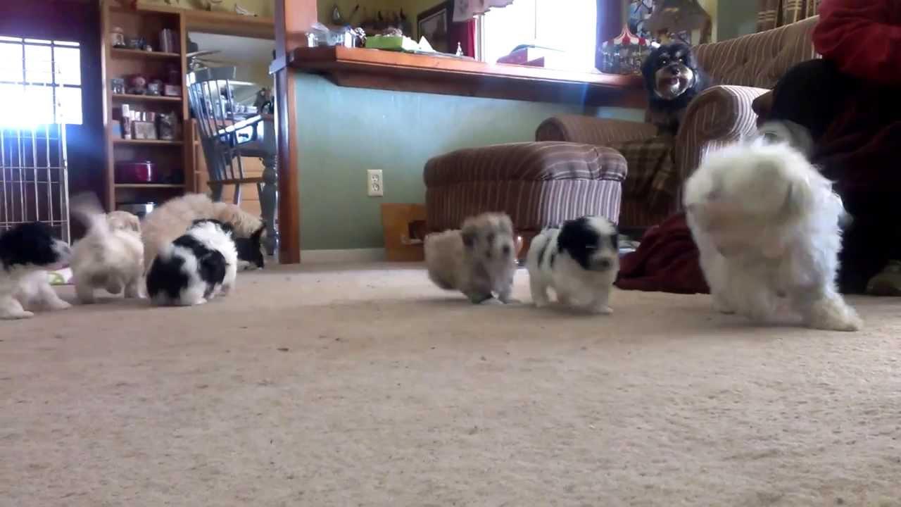 dogs puppies sale sacramento