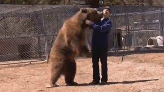 5 Shocking Bear Attacks Caught on Video
