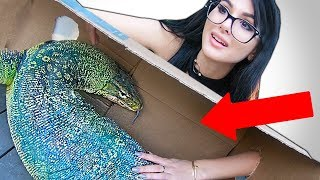 WHAT'S IN THE BOX CHALLENGE **LIVE ANIMALS**