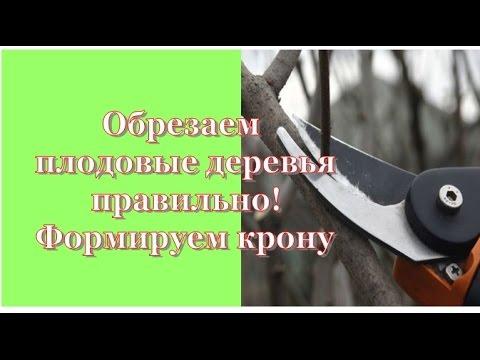 Формируем крону дерева своими руками от А до Я. Советы АГРОНОМА.