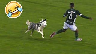 Animales en Campos de Fútbol ● Divertidos Momentos