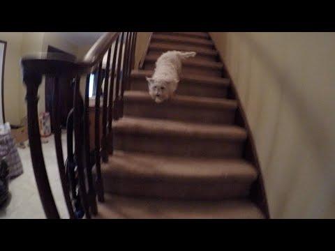 BECKHAM WALKS DOWNSTAIRS!