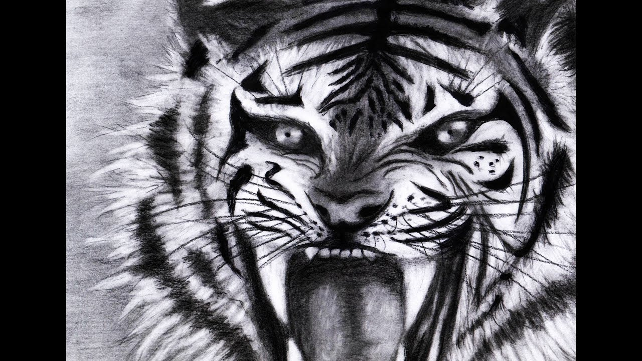 как рисовать тигра карандашом: