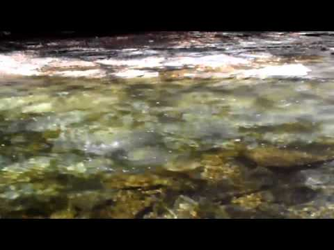 10/12/13 Fly Fishing Walnut Creek PA for Steelhead Abel Orvis