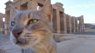 EGYPTIAN CATS | Egypt Travel Vlog | Aswan, Unfinished Obelisk & Elephantine
