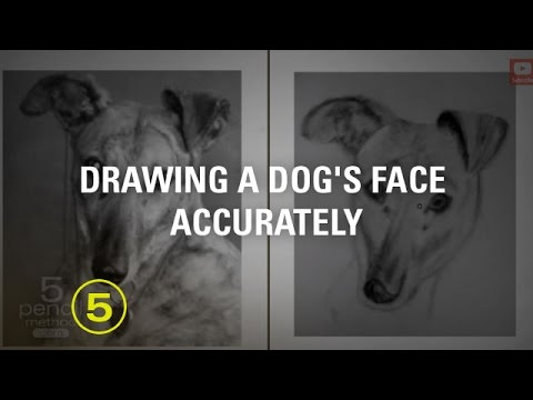 How to Draw a Dog's Face Accurately