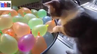 Funny Cats Videos   Funny Animals Compilation 2016