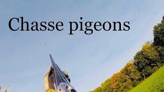 chasse aux pigeons 2018 / hunting pigeons 2018 / drift 4k