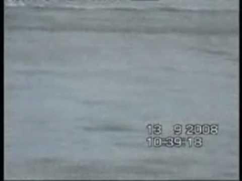 Mersey Swim 2008