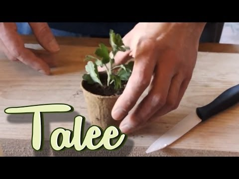 How to make the cuttings - Come fare le talee - SblogTv Tutorial