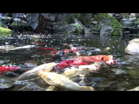 Pondless waterfalls ponds koi how to save money and for Do it yourself fish pond