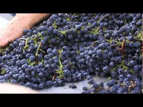 The Walla Walla Vintners Story