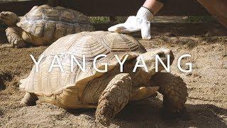 [Travel to Yangyang, South Korea ] SONY FDR X3000, a6500 ,SEL18105 sigma18-35 , samyang 10mm