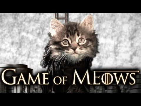Game Of Throne Cat Theme