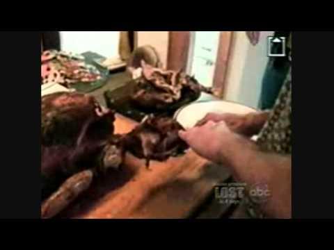 Home Videos - Part 77