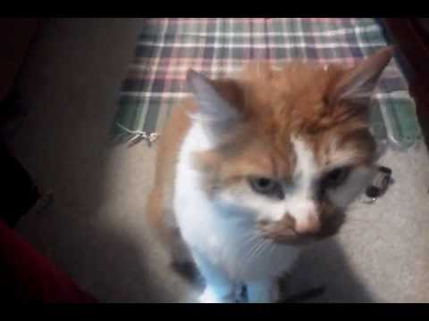 Cute Cat Saying i Love You Cat Says Sorry And i Love You